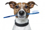 Burnos higienos priemonės