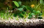 Akvariumų priežiūra ir remontas